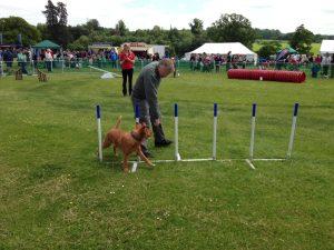 Dog Trials